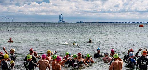 Svømmere i Storebælt med Storebæltsbroen i baggrunden