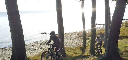 Mountainbike i Teglværksskoven langs Storebælt